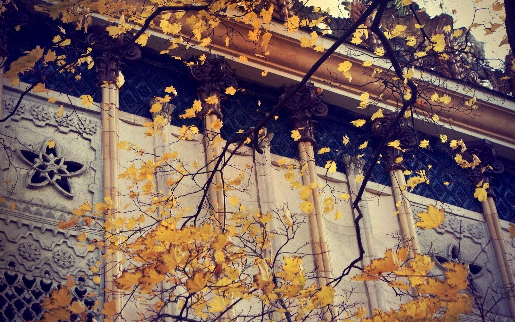 autumn leaves yellow OCE