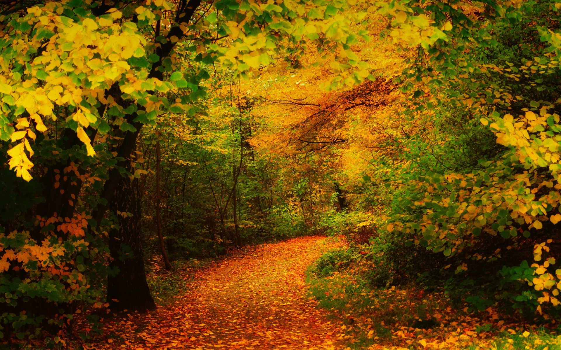 The Yellow Path Trees Autumn Leaves Desktop Wallpapers For Free