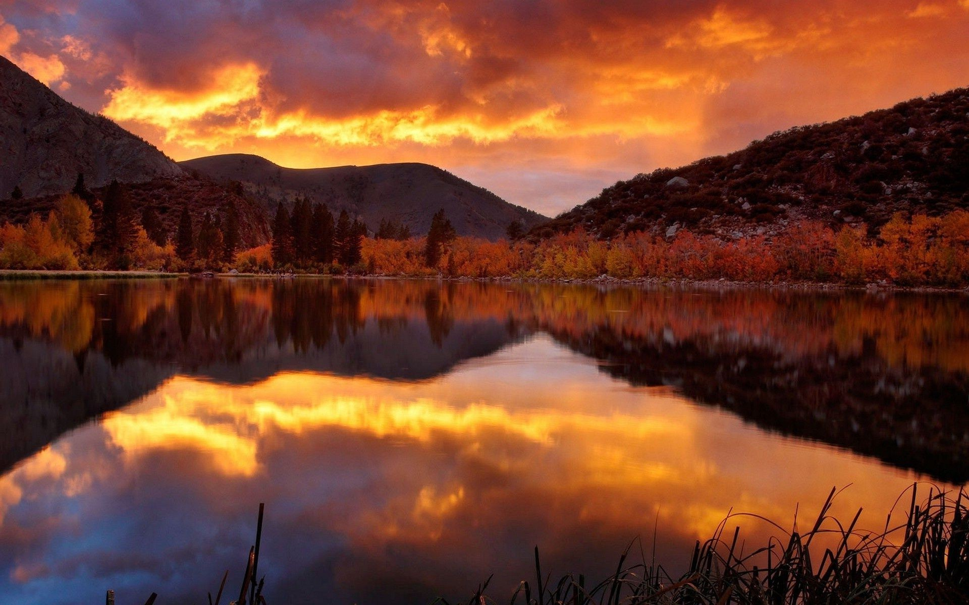 the lake dry reed grass autumn sunset