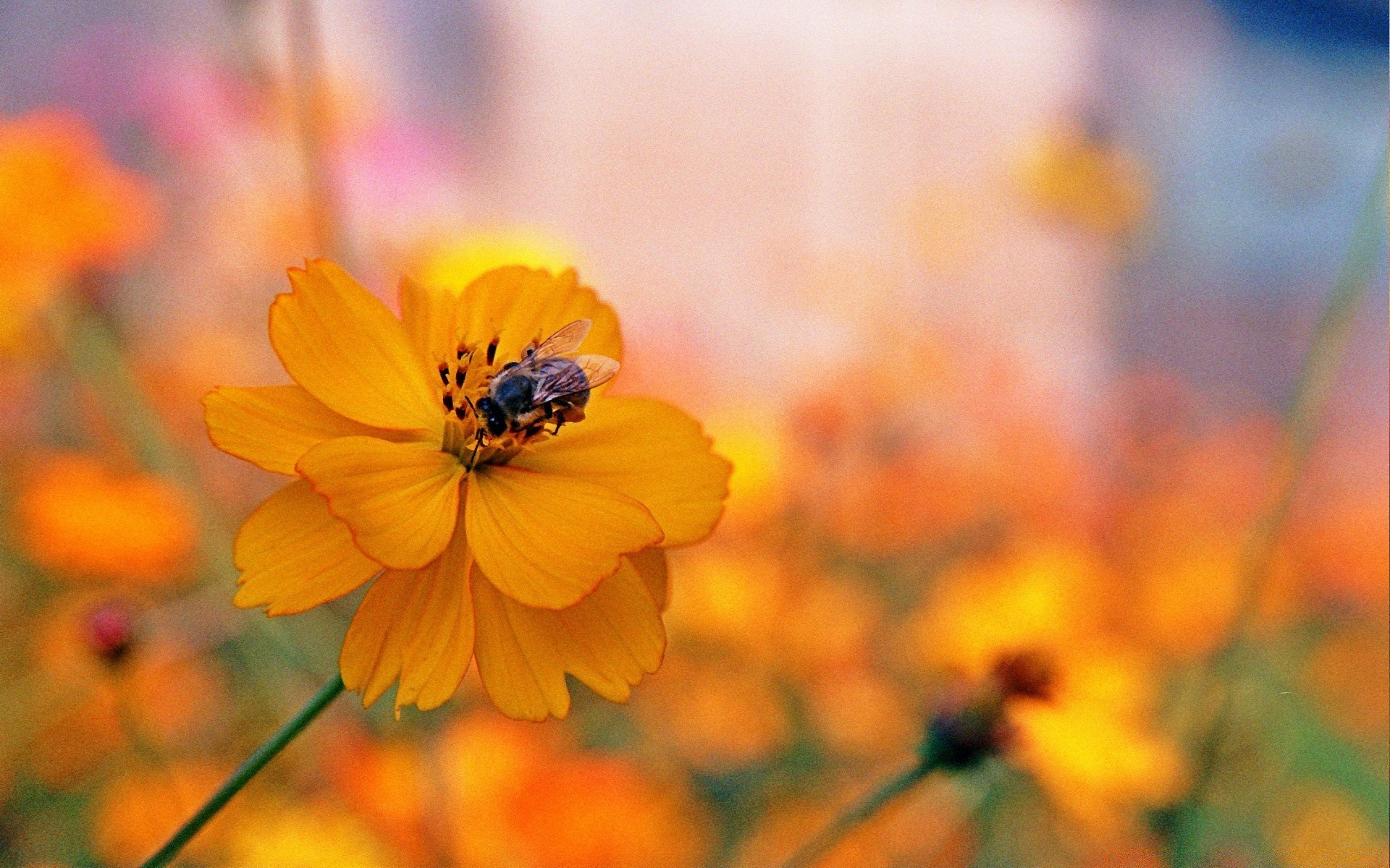 insects nature flower summer flora leaf bright outdoors garden color growth fair weather blur