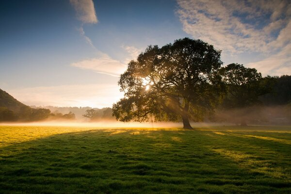 Nature tree fog the dew the rays of the sun grass light