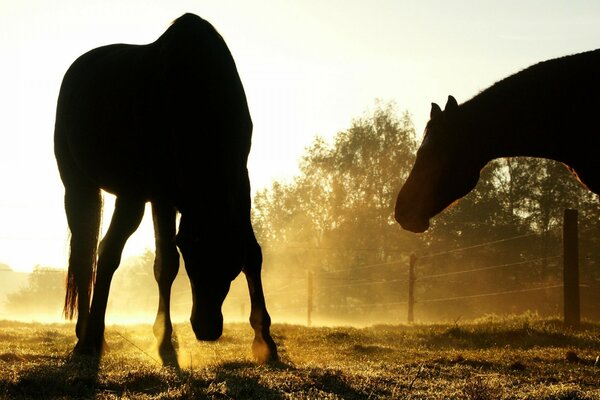 Backlit Horses Duesseldorf Germany