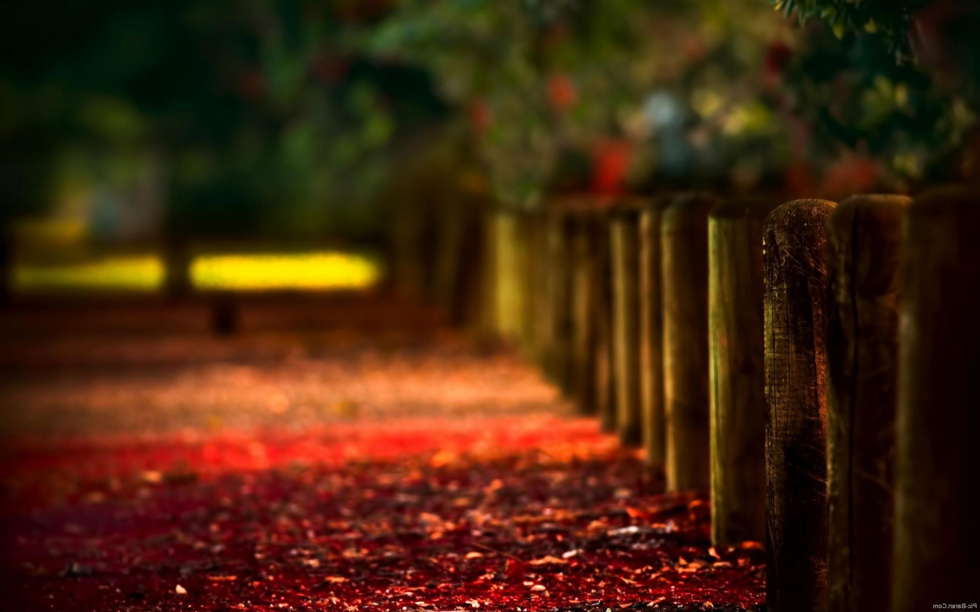 focus columns cover red autumn leaves beautiful