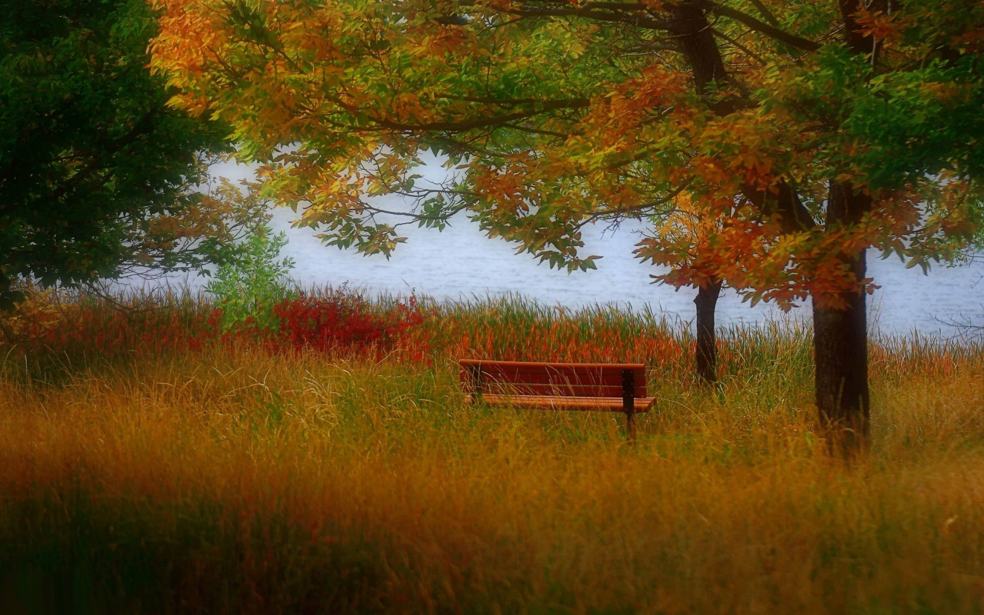 bench lake autumn wood grass
