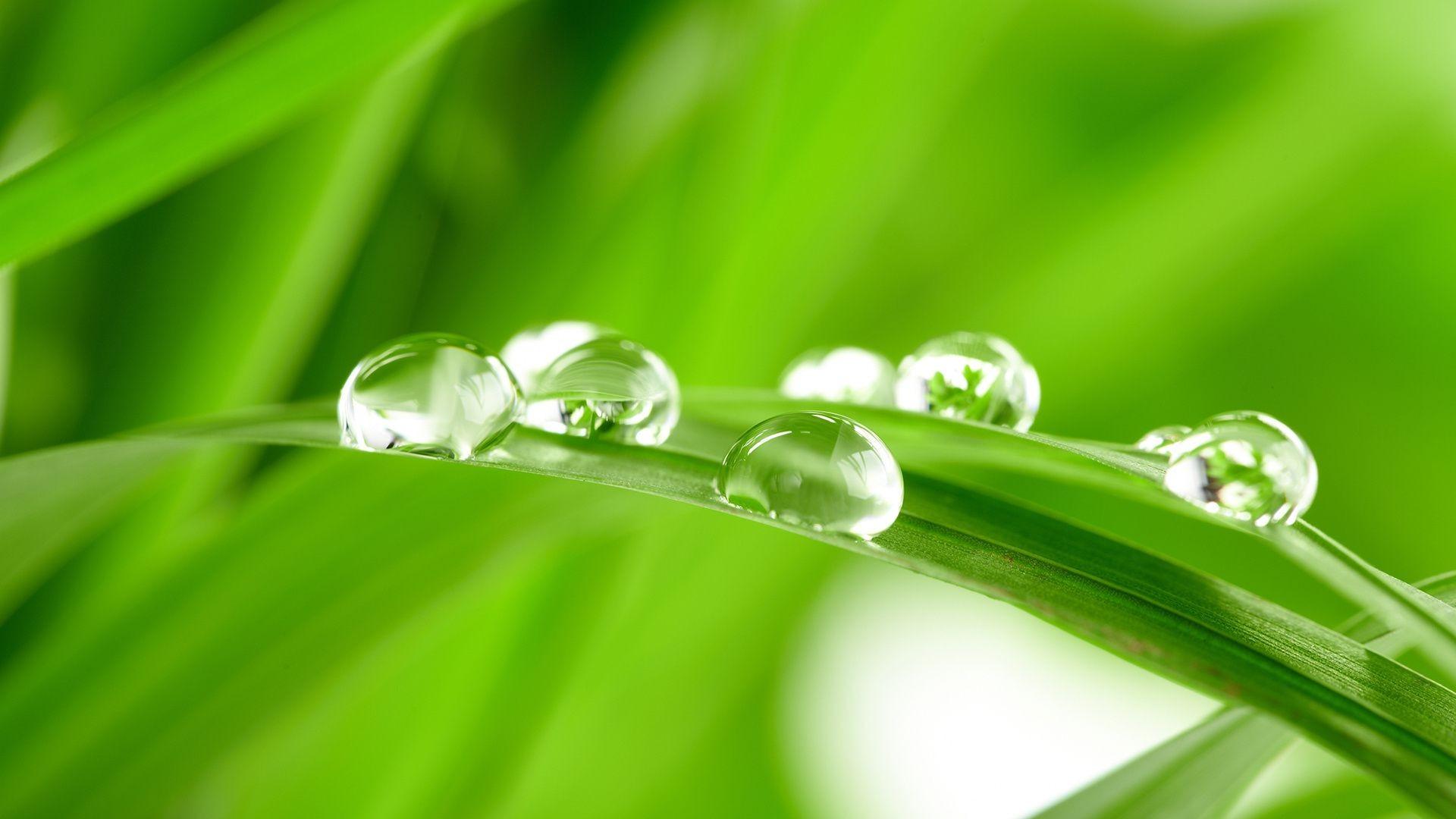 травинки капли без смс