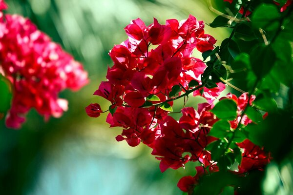 flowers red beautiful