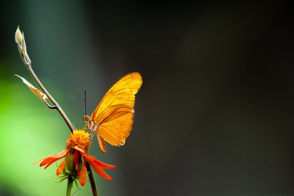 Butterfly In The Light