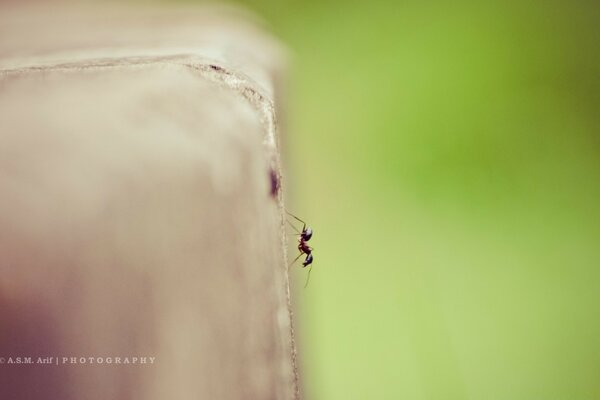 Lonely Ant