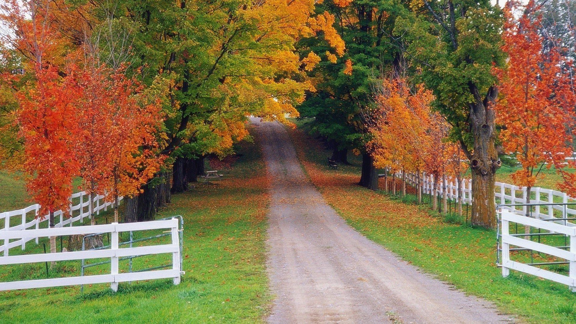 осень в деревне без регистрации