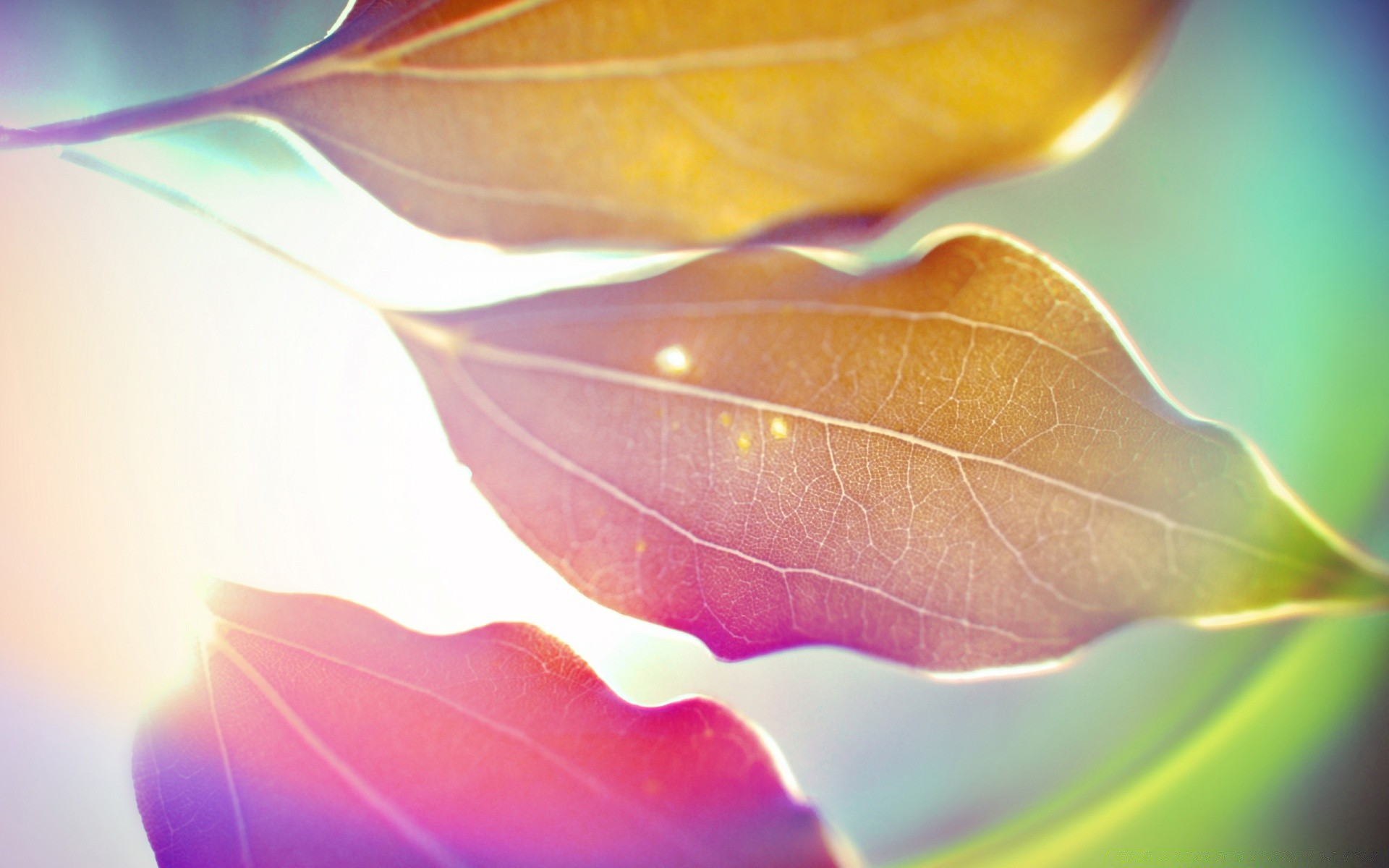 Colored Leaves 9 Android Wallpapers For Free