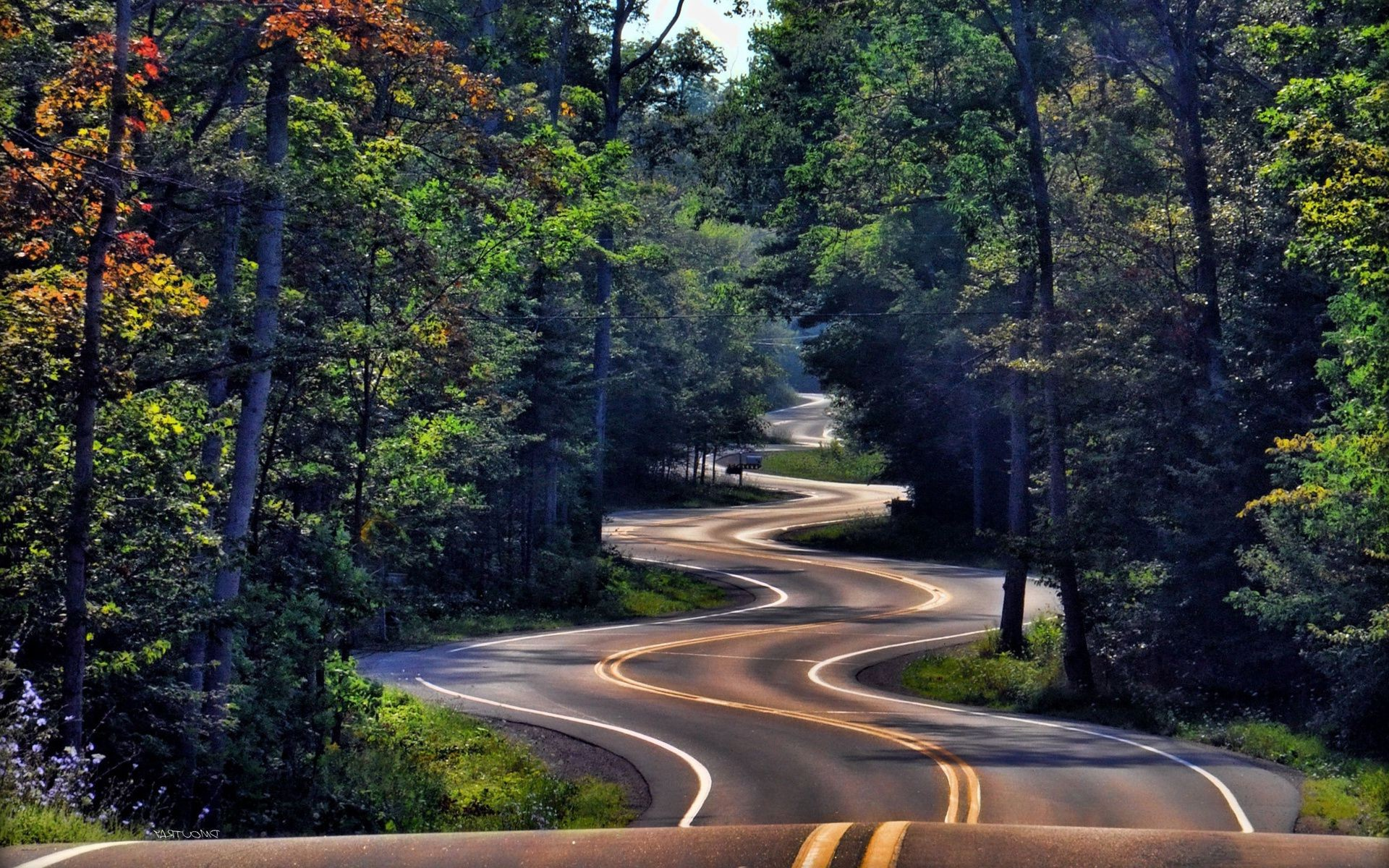 Forest Winding Road Nature Desktop Wallpapers For Free