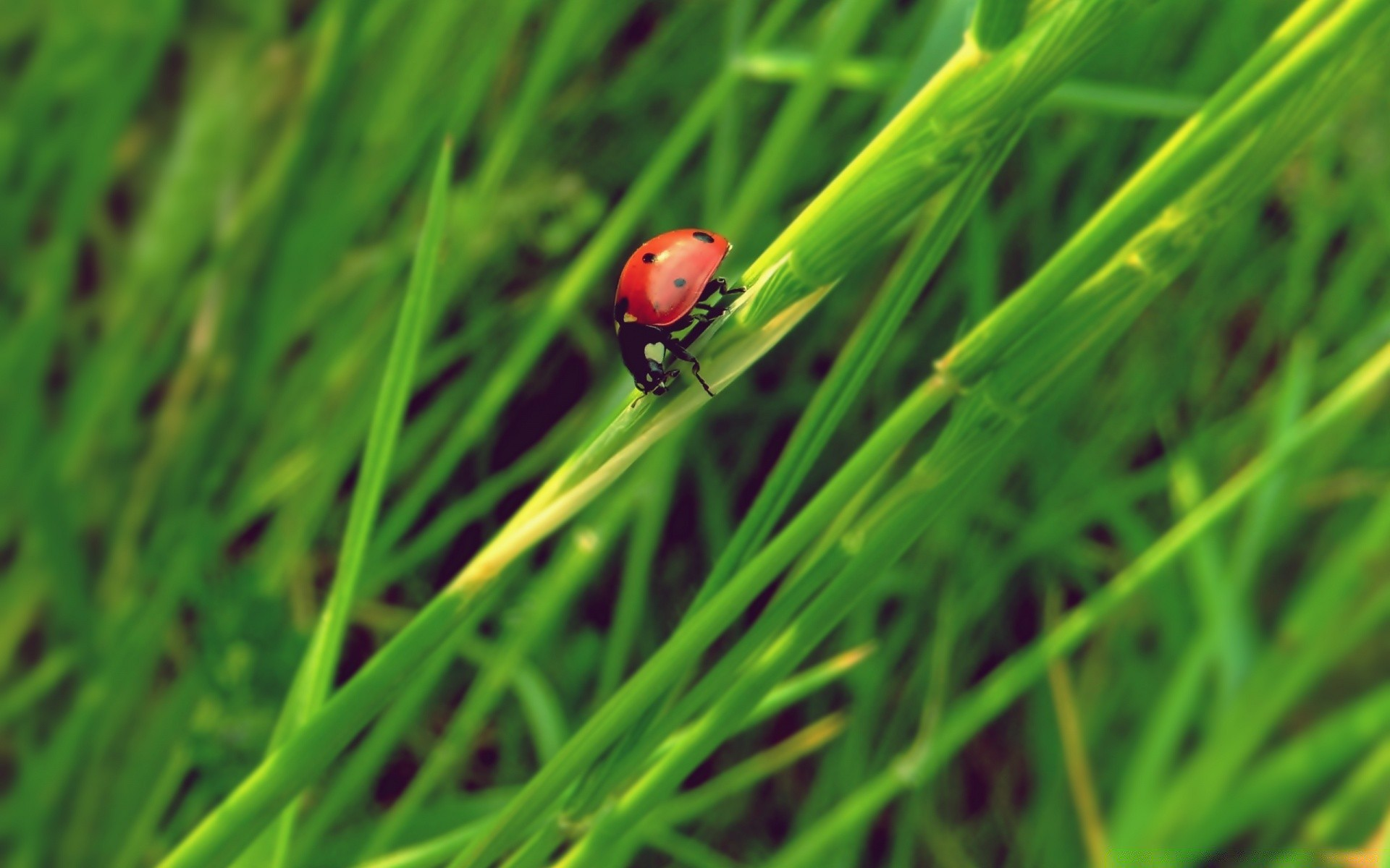 insects grass leaf growth blade flora ladybug nature lawn dew summer environment garden hayfield insect rain biology ecology outdoors drop