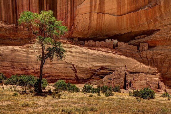 USA tree nature rock canyon
