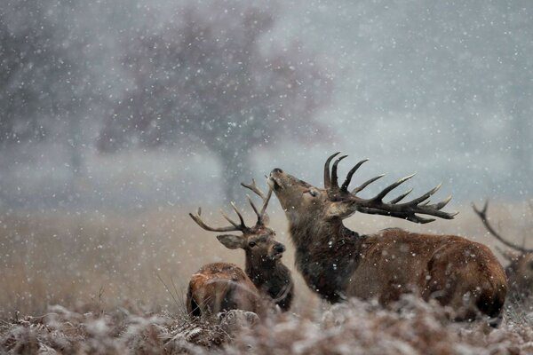 Deer snow nature