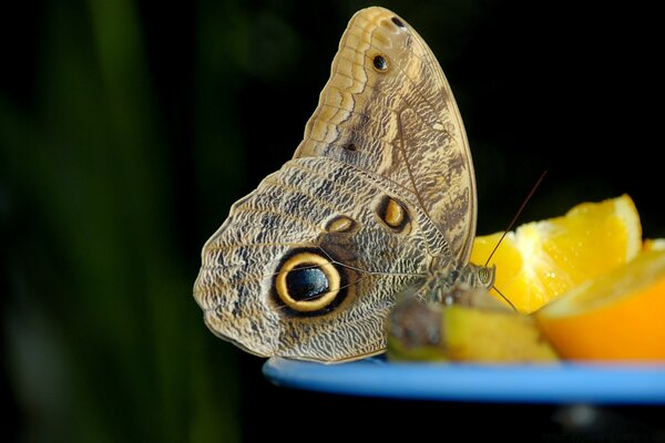 Butterfly, Orange Fruit