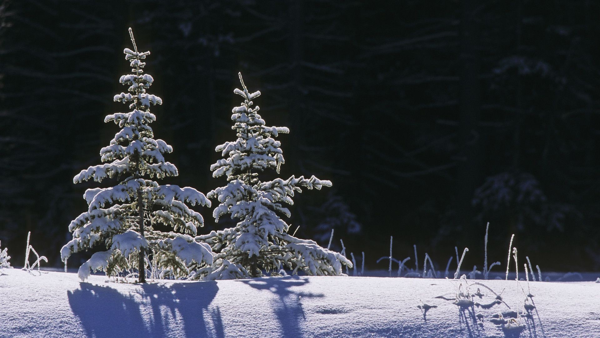 winter snow cold frost christmas frozen season ice tree nature frosty weather snow-white wood landscape pine outdoors