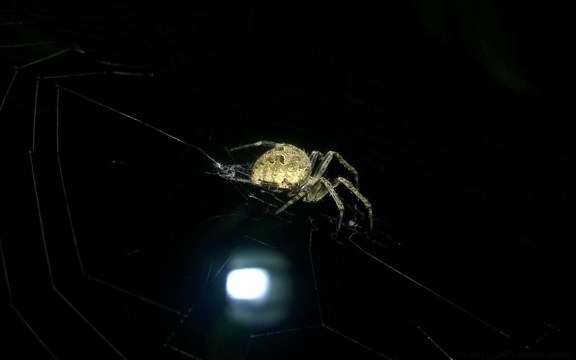 Лампа-паук без смс