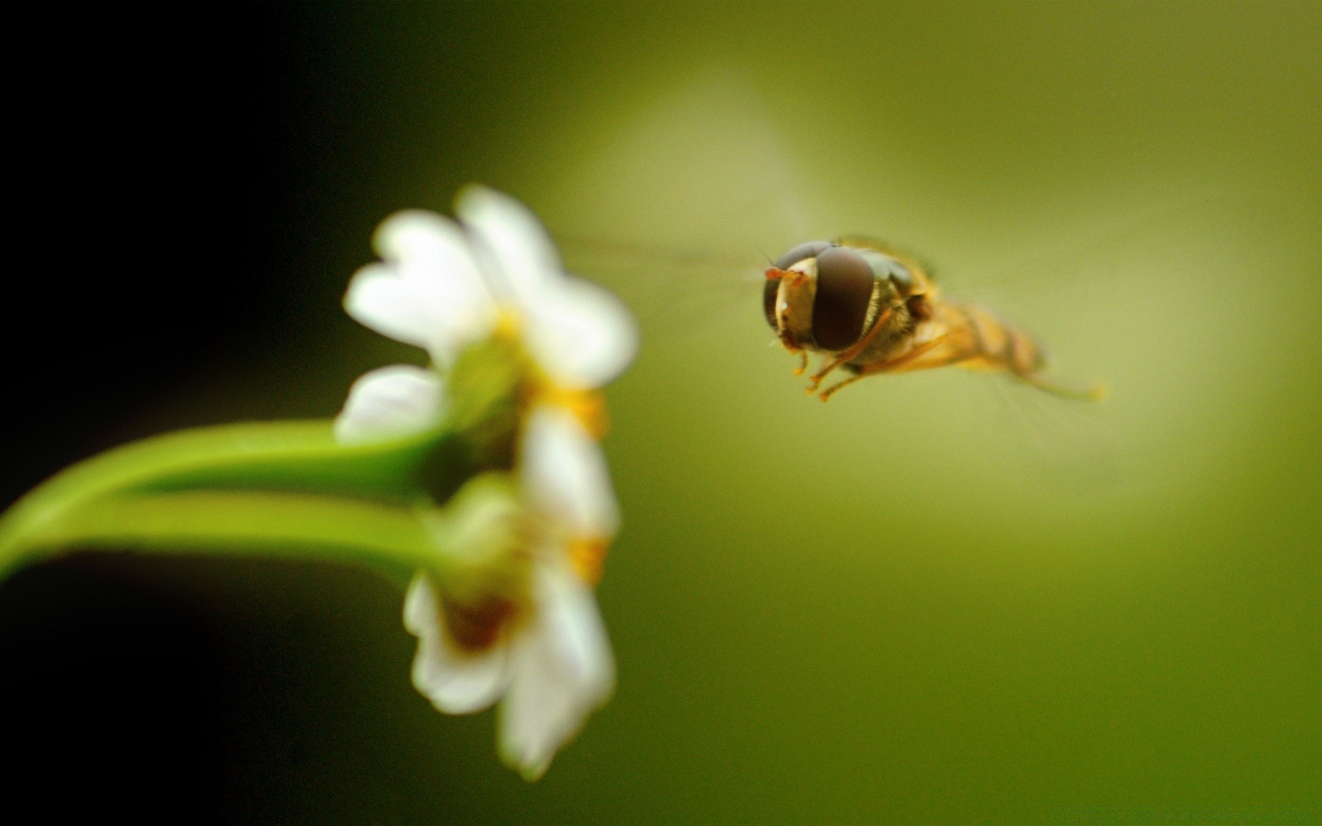 insects insect nature flower blur outdoors garden leaf invertebrate wildlife flora bee growth biology