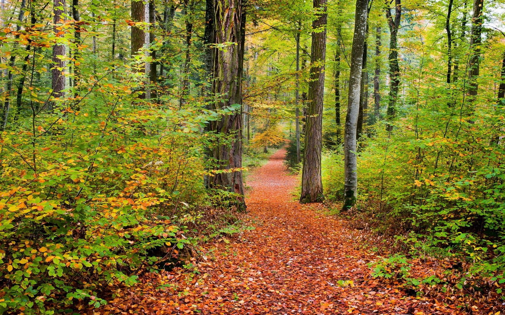 autumn fall leaf wood nature tree landscape park season footpath maple guidance scenic scenery beech environment fair weather lush gold outdoors scene