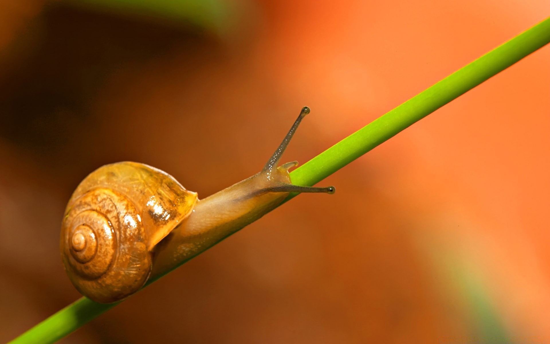 Insects snail invertebrate gastropod garden insect slow shellfish ...
