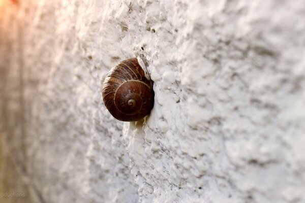 Snail On Wall