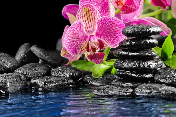 pink Orchid black Flower flat water stones