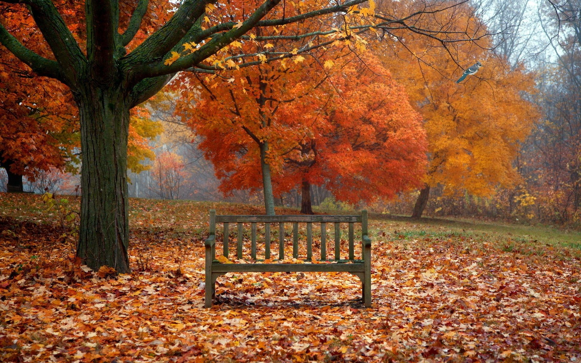 bird bench leaves autumn nature