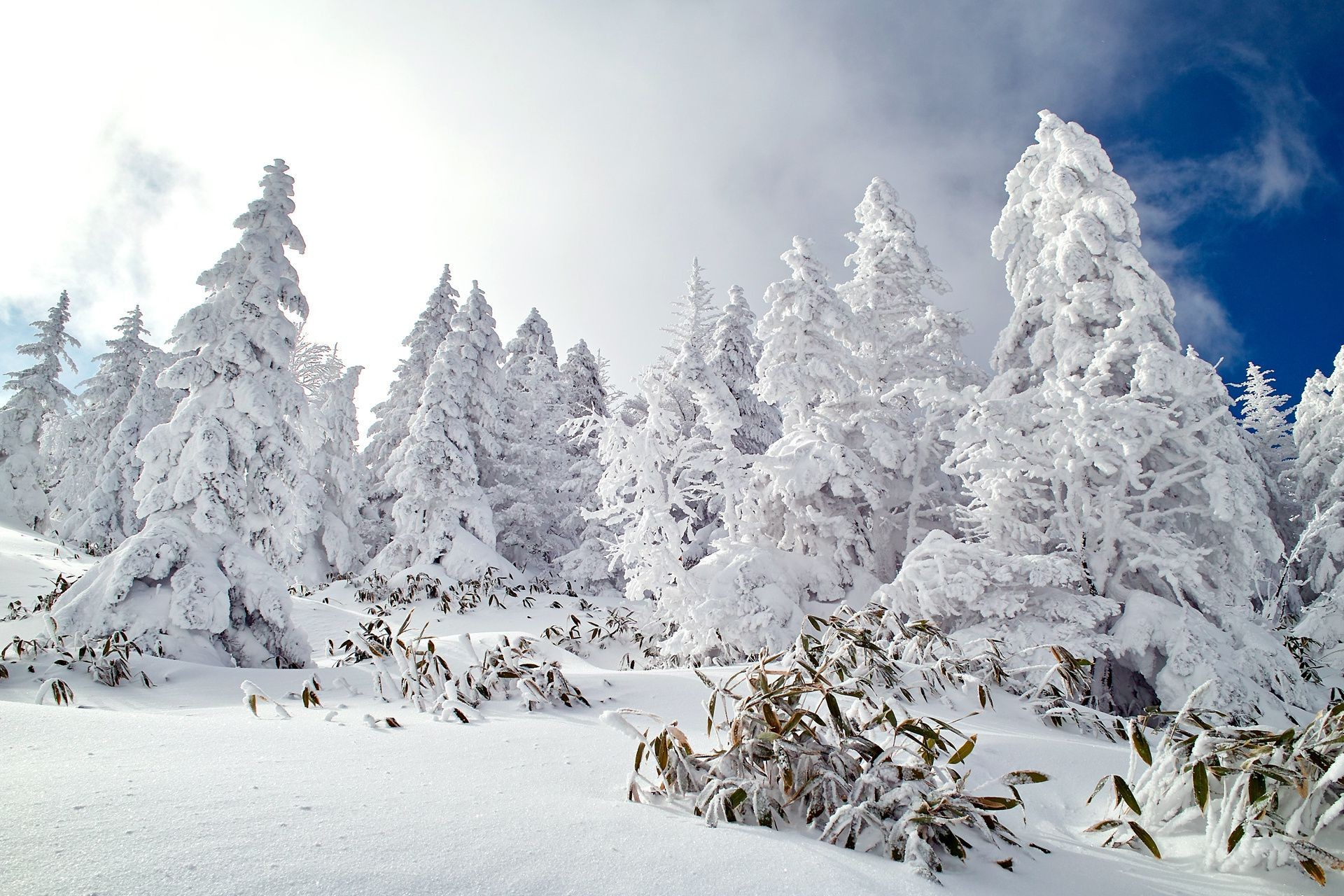 Nature sky forest snow winter