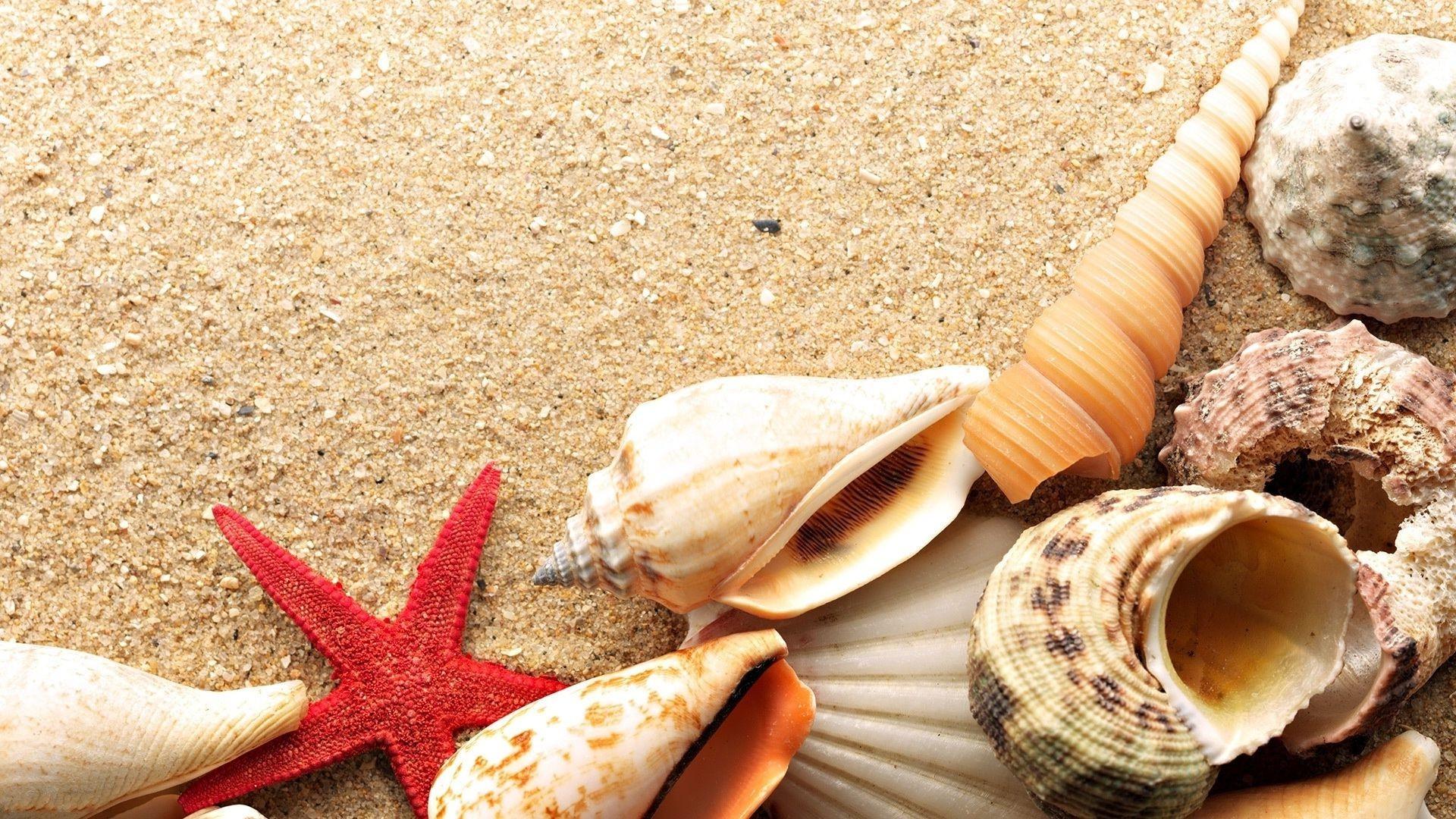 Ракушки, песок, лист подборки