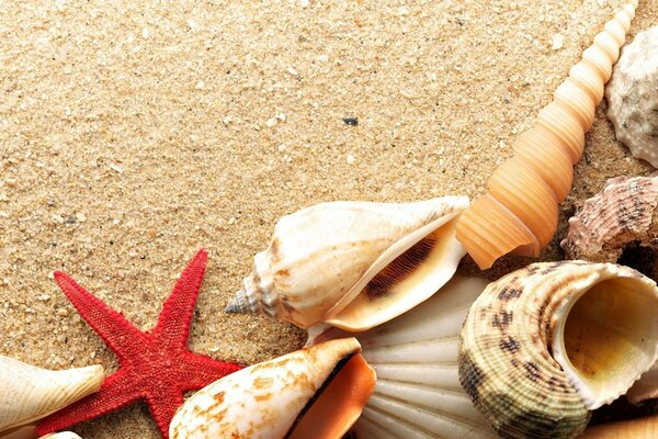 sea shells starfish sand summer