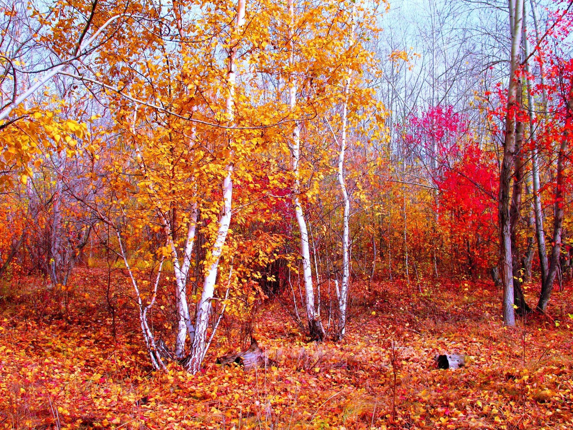 Фото природа зима весна осень лето 6