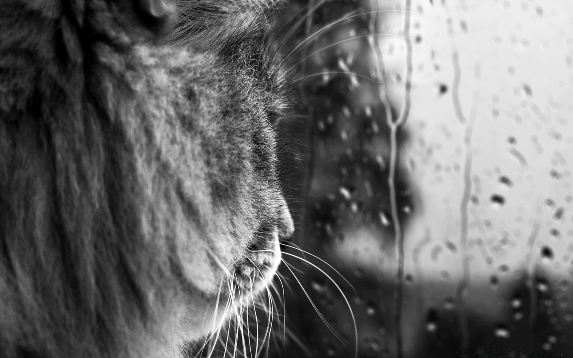 Rainy Day Bw Android Wallpapers