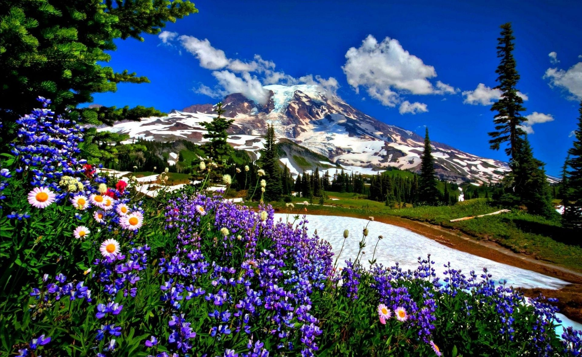 mountains flower nature landscape outdoors summer scenic hayfield tree flora season mountain grass color travel wood park rural sight