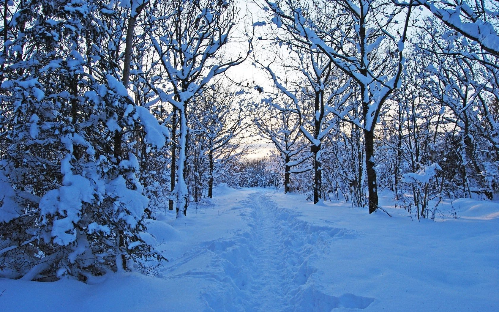 snow nature forest