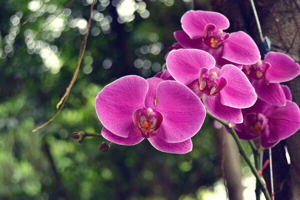 a branch of Orchid flowers bokeh tree