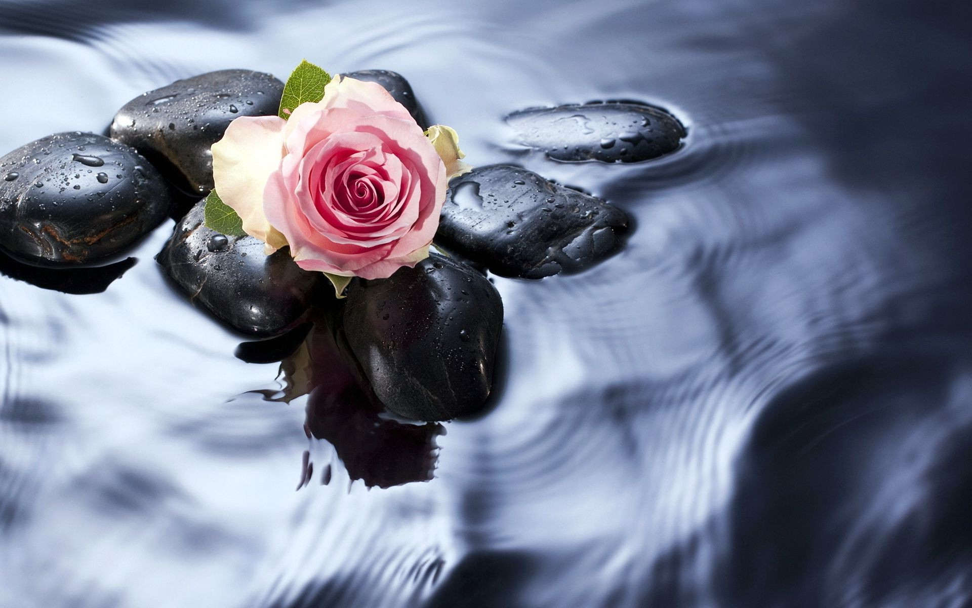 rose nature water zen drop beautiful flower wet love reflection food summer leaf meditation desktop purity