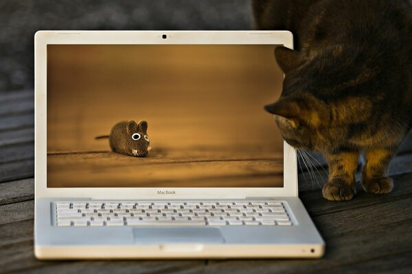 laptop cat image mouse