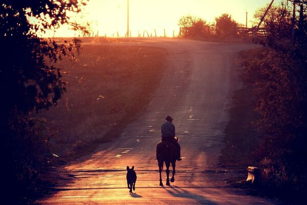 dog sunset horse road