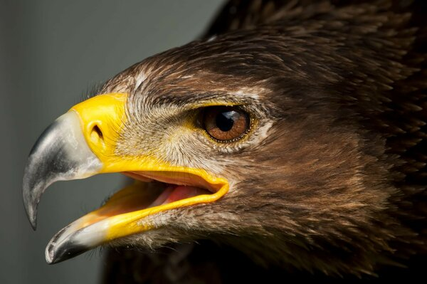 bird head feathers beak carnivore eagle