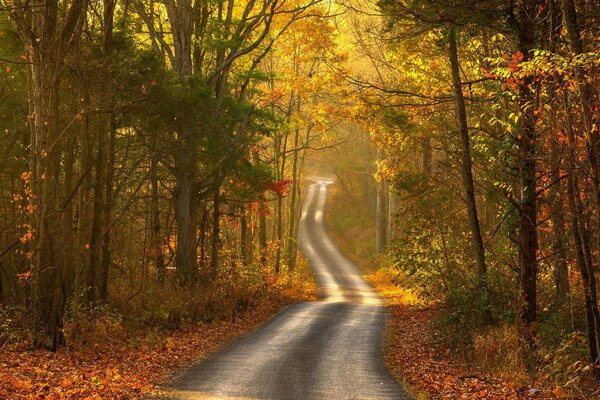 landscape autumn road