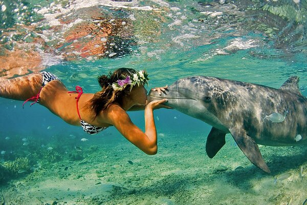 A girl kisses a Dolphin under water