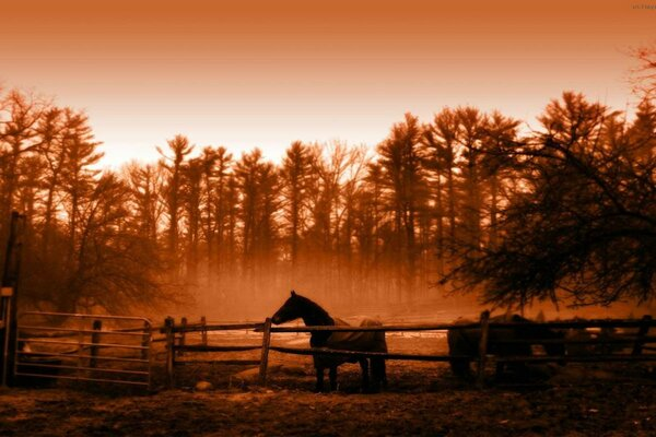 peaceful morning golden horse animal landscape landscape