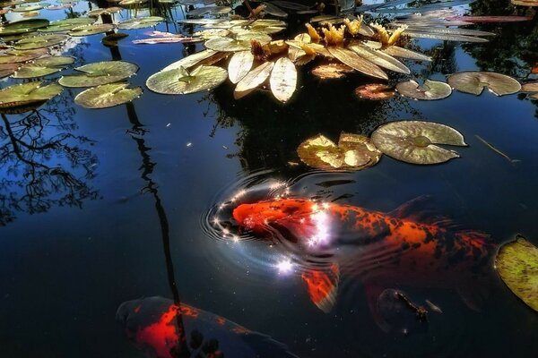 the reflection of the water plants fish