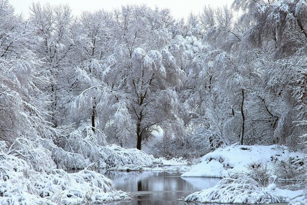 snow river trees Winter