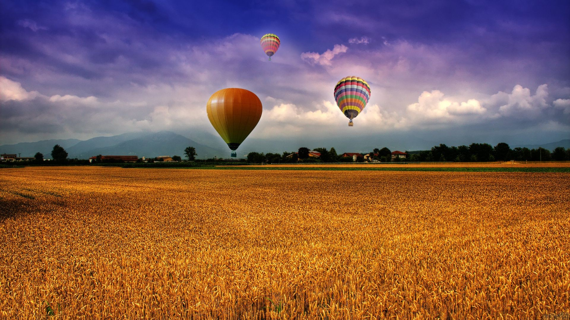 Flight of balloons over wheat field