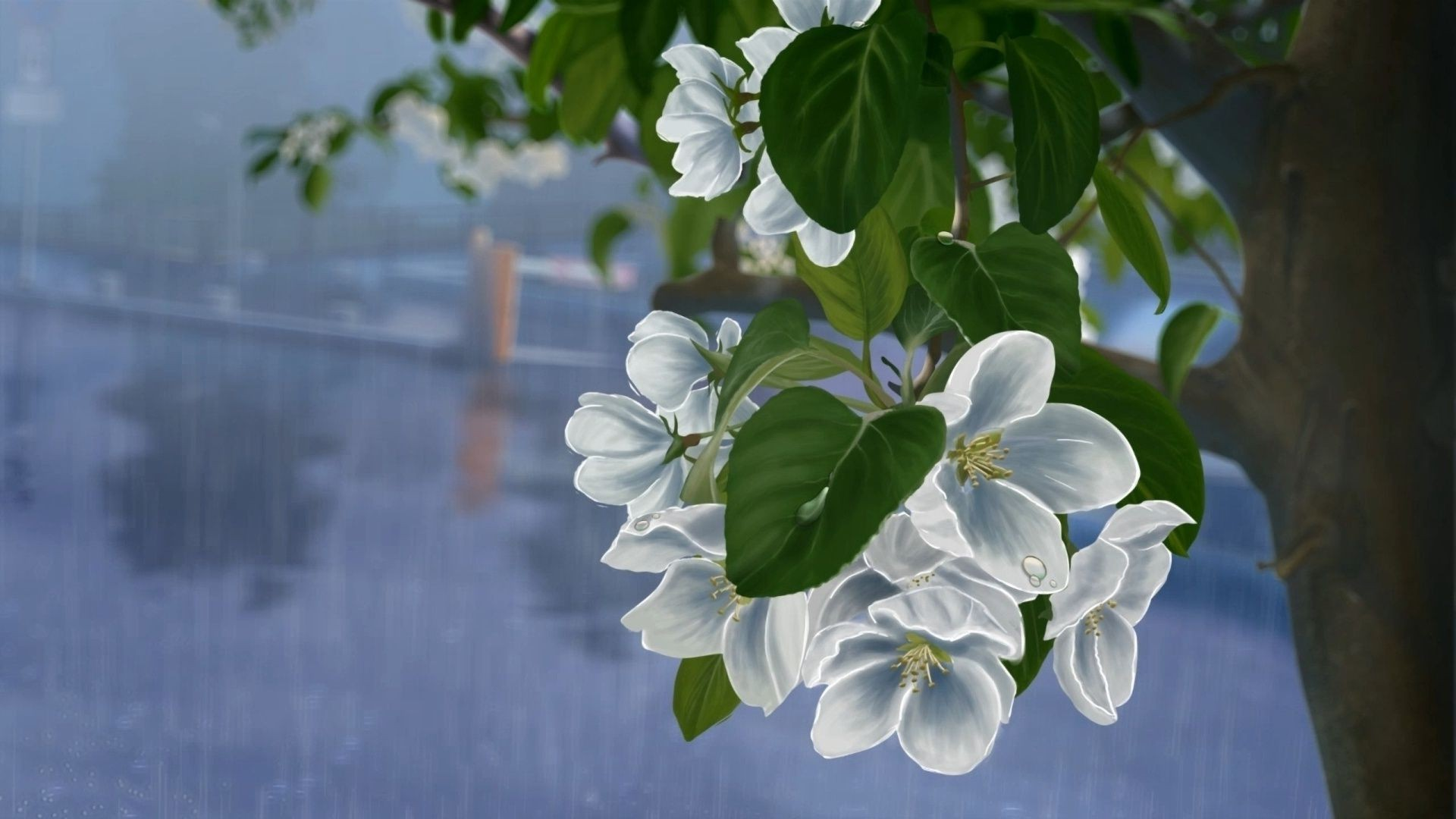 drops of white rain picture Art, Apple tree flowers