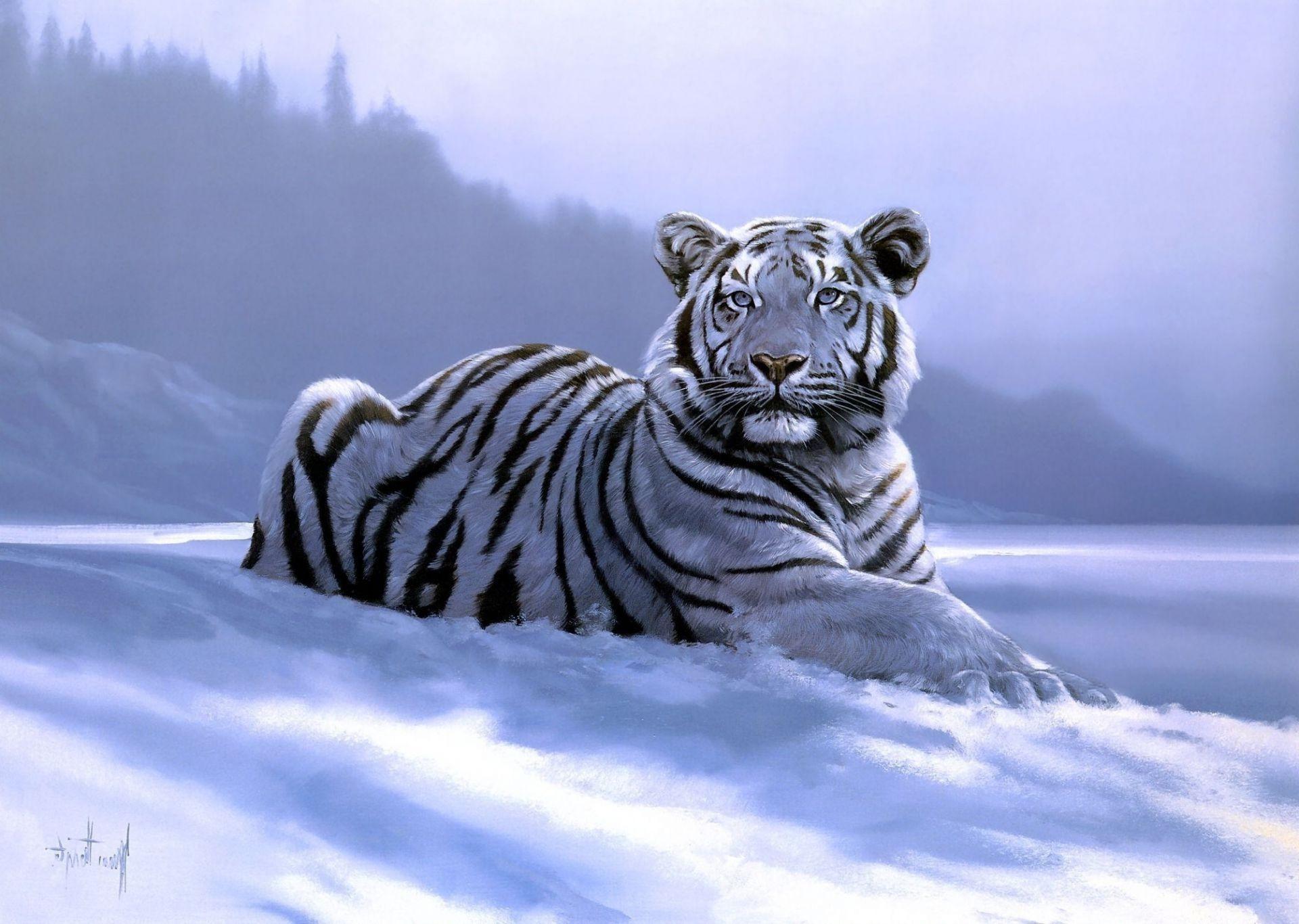 белый тигр на снегу  № 988891 бесплатно