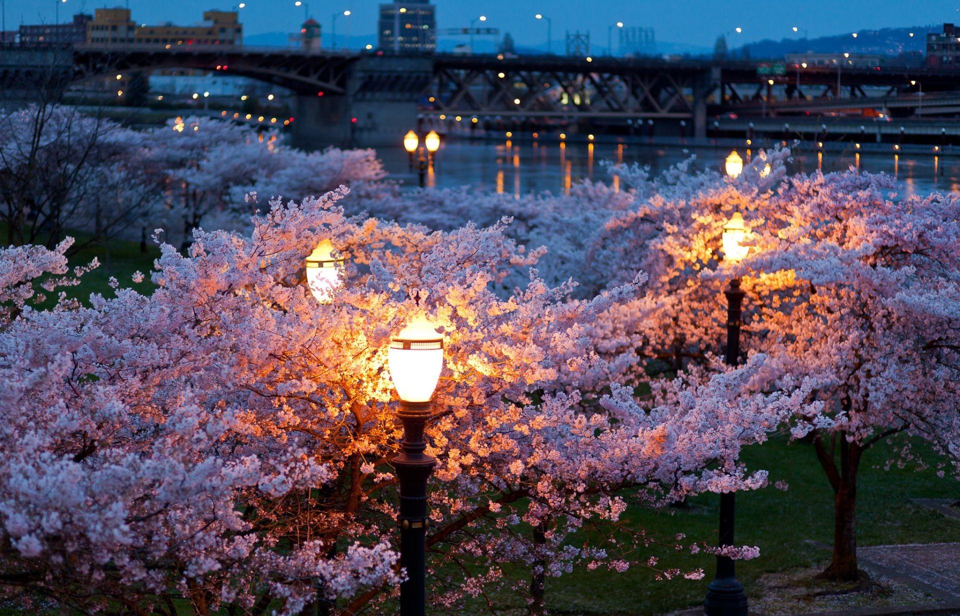 The Lights Of The City Night Lights Evening Spring Bridges