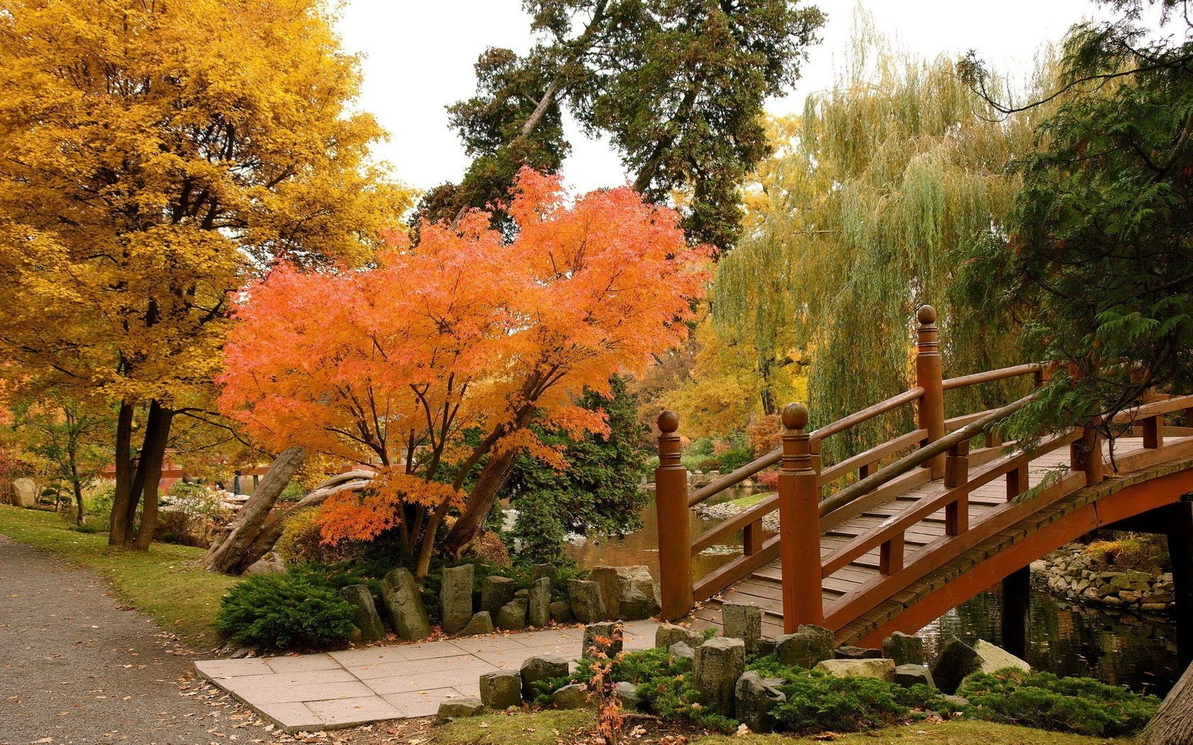 autumn fall leaf tree park nature wood outdoors landscape garden maple season scenic guidance lush travel