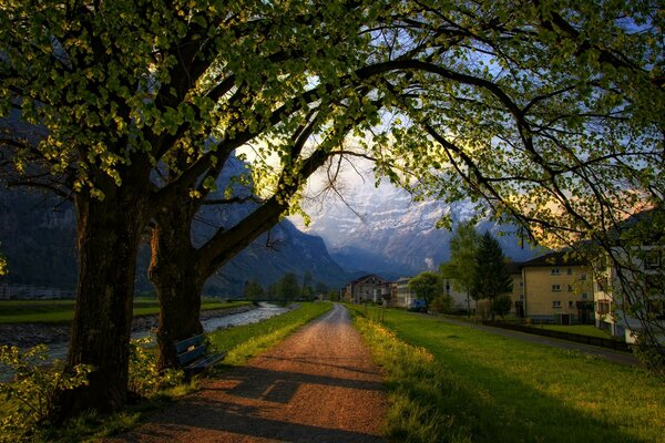 evening bench trees road spring Switzerland